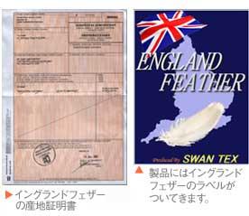 イングランドフェザー産地証明書