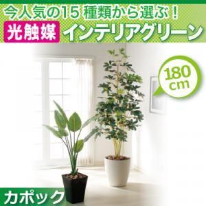 今人気の15種類から選ぶ光触媒インテリアグリーン【カポック180】