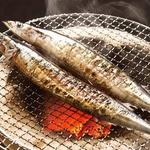 【10月31日で終了】特大トロ秋刀魚 2kg(9本~12本)