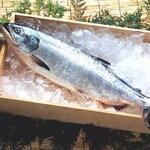 【お歳暮用 内のし付き(名入れ不可) 北洋産】若紅鮭(さけ)1本