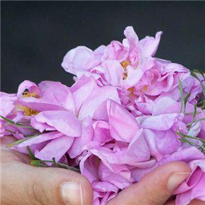【紫根エキス配合】地中海の薔薇ジェル