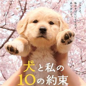 【限定生産】「犬と私の10約束」ソックスの抱き枕