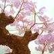 招福樹(ローズクォーツ) 写真3