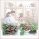 健康診断結果の開き直りは最悪の原因に!効率よく健康生活をサポートする本格健康食品姫マツタケ 写真3