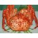 豪華!北海3大蟹セット 写真2
