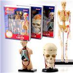 人体解剖パズル3種セット