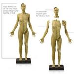 アナトミー(人体模型)フィギュア 女性Ver1の詳細ページへ