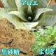 潤い保湿パック 「エステな目覚め」 写真4