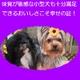 アーテミス・フレッシュミックス スモールブリード・アダルト3kg 1才〜7才(小型成犬用) 写真4
