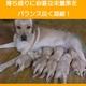 アーテミス・フレッシュミックス ミディアムラージブリードパピー1kg 12ヶ月以下の中・大型犬幼犬 写真4