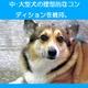 アーテミス・フレッシュミックス アダルト・ドッグ3kg 1才〜6才の中型・大型成犬用ドライフード 写真4
