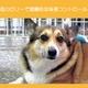 アーテミス・フレッシュミックス ウエイトマネージメントアダルトドッグ3kg 体重コントロール犬用 写真4