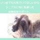 アーテミス・フレッシュミックス スモールブリード シニア6.8kg 7歳以上の小型犬用 写真4