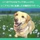 アーテミス・フレッシュミックス ミディアムラージブリード シニア6.8kg 6才以上の中・大型犬 写真4