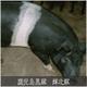 鹿児島黒豚 輝北豚 焼肉用 肩ロース500g 写真4