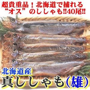【超レア】北海道で捕れる貴重な