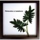 《リーフパネル》F-style Frame Philodendron cv. kookaburra(フィロデンドロン・クッカバラ)