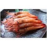 【老舗鮨屋御用達】築地魚河岸から直送 甘エビ (1kg) たっぷり1kgで驚きのこの価格!
