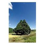 鮭川村産はえぬき 30kg