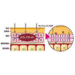 「3M for MADONNA」の進化『インパクト』(美容液)60ml