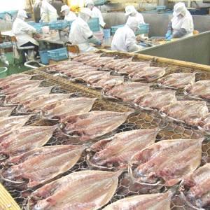 沼津「奧和」のひもの詰合せ5種(9枚)あじ、さんま、かます、金目鯛、ほっけ05