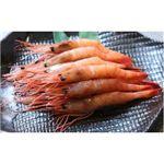 【老舗鮨屋御用達】築地魚河岸から直送 甘エビ (1kg) たっぷり1kgで驚きのこの価格! ご贈答用