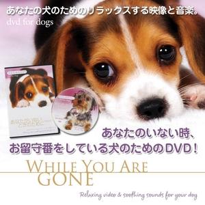 犬のためのDVD / あなたがいないときのために