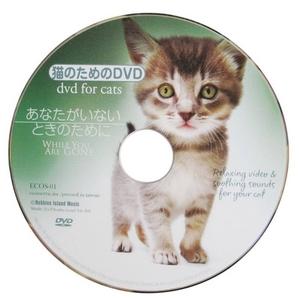 猫のためのDVD / あなたがいないときのために