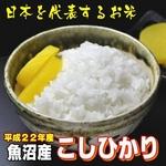 【平成22年産新米 味と価格に自信アリ!】魚沼産こしひかり 白米10Kg(5kg×2)