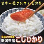 【平成22年産新米 味と価格に自信アリ!】新潟県産こしひかり 白米10Kg(5kg×2)