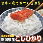 【平成22年産新米 味と価格に自信アリ!】新潟県産こしひかり 白米5kg