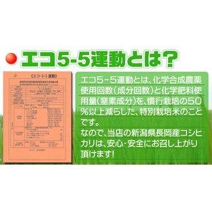 新潟名物伝統の味!笹だんご こしあん10個 + 山ごぼうの葉(つぶあん)10個 計20個セット