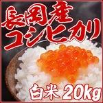 新潟名物伝統の味!笹だんご みそあん10個 + 黒ゴマあん10個 計20個セット