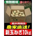 特別栽培農家直送「新玉ねぎ」10kg