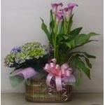 母の日用 花かご『D』の詳細ページへ
