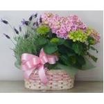 母の日用 花かご『C』の詳細ページへ