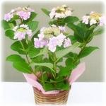【母の日限定ギフト・5月5日12時で受付終了】ローズハート♪ バラをハート型にアレンジ