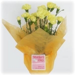 【母の日ギフト!5月5日まで!】カーネーション 黄系 ラッピング 5号鉢の詳細ページへ