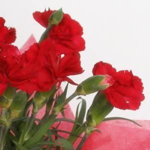 【母の日ギフト!5月5日まで!】カーネーション 赤系 ラッピング 5号鉢
