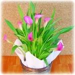 【母の日ギフト!5月5日まで!】カラー ピンク系 バスケット 5号鉢の詳細ページへ