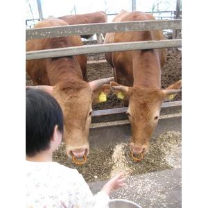 100%国産飼料肥育「阿蘇赤牛」1頭(約650kg)分の枝肉・出荷11月下旬(予約販売)熊本県阿蘇産山村・井雅信様肥育