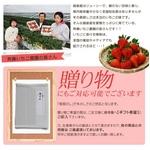 斉藤いちご農園のいちごジェラート&シャーベット  10個入