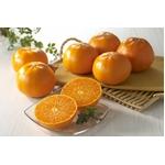 新しい柑橘 『せとか』 12個入り(約2Kg)の詳細ページへ
