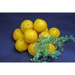 鹿児島産 サウスオレンジ 10個入り(約2.5Kg)の詳細ページへ