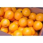 アメリカ産 ネーブルオレンジ 30玉 ネーブルオレンジ 30玉(約8Kg)の詳細ページへ
