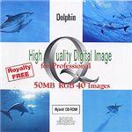 イメージギャップ High Quality Digital Image for Professional Dolphin MUUS033