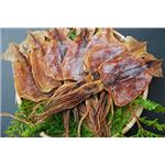 魚介類|シャイニング