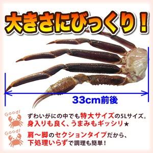 生ずわいがに5kg【船凍品】【特大5Lサイズ】【セクション12肩入り】
