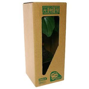 消臭ミニグリーン:  アロカシア KO-7 (2-3畳用)