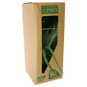 消臭ミニグリーン:  エアプランツ KO-9 (2-3畳用)